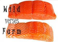 The nutritional differences between wild and farmed fish